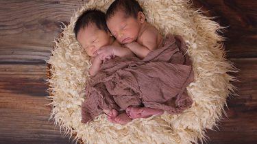baby tweeling in nest