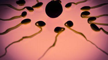 sperma eicel bevruchting