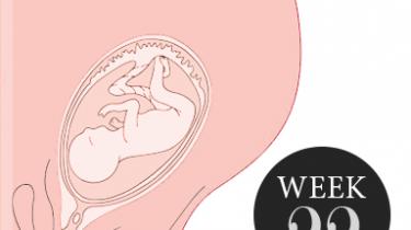 22 weken zwanger