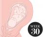 30 weken zwanger
