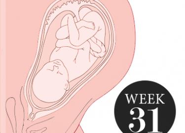 31 weken zwanger