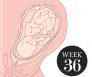 36 weken zwanger
