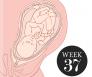 37 weken zwanger