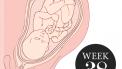 38 weken zwanger