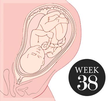 38 Weken Zwanger Zwanger Week 38 Over Jou Je Baby En 5 Symptomen