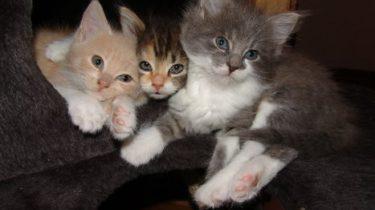 cat_22400_1280.jpg