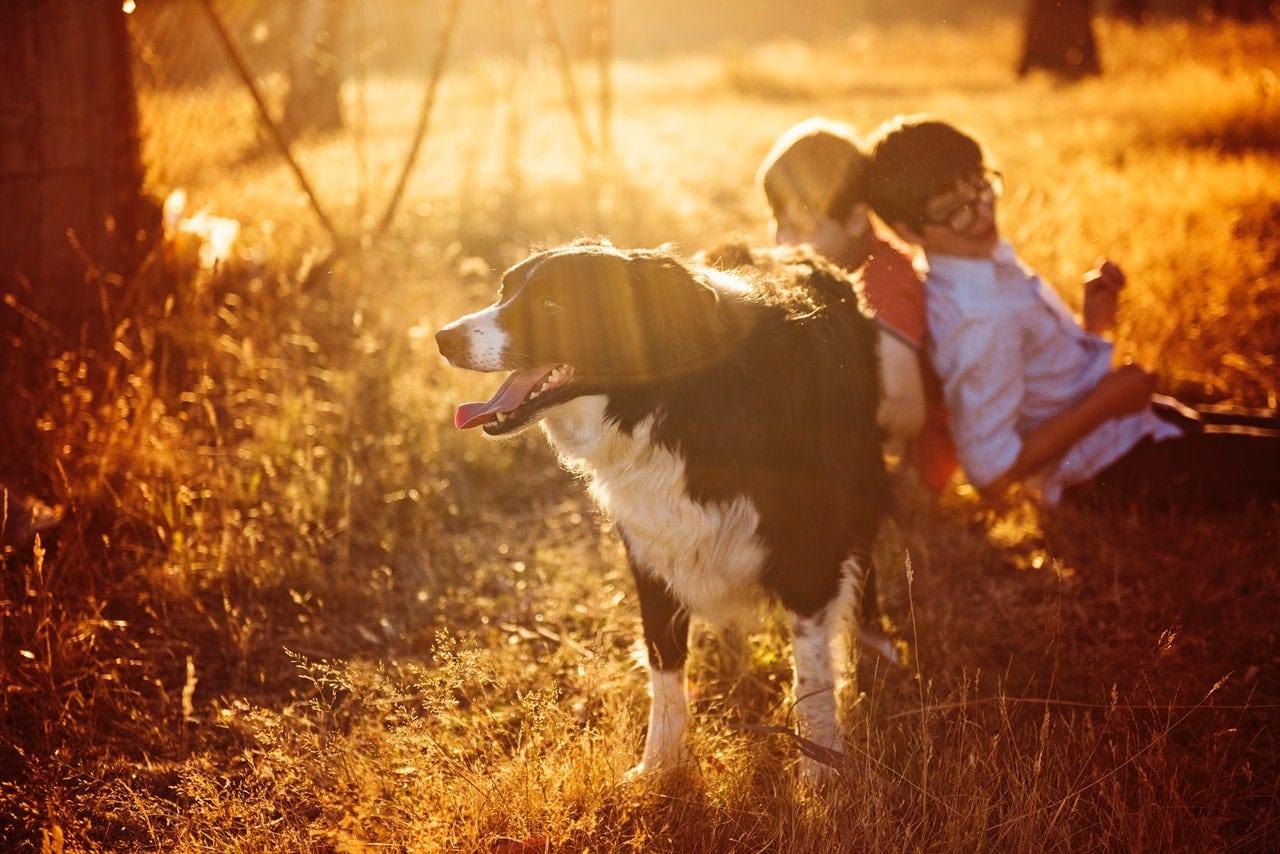 kinderen laten hond uit